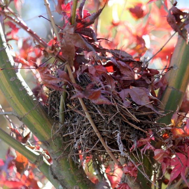 03 Bird nest IMG_5447