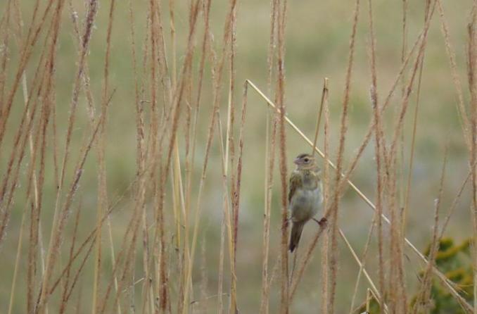 r autumn 2016 bird on grass 1