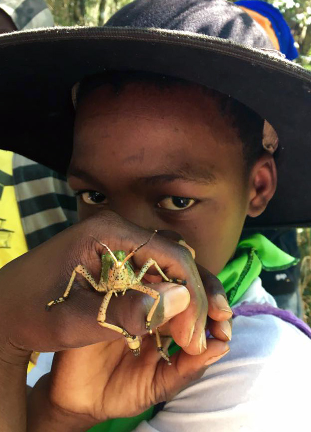 Dargle Primary pupil makes friends with a grasshopper