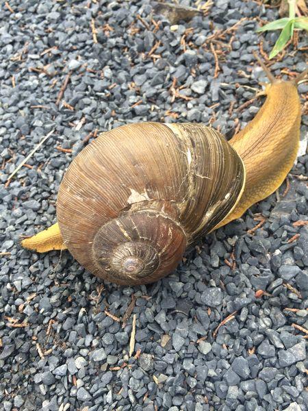 carnivorous-snail-on-d707