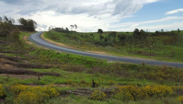 dargle-impendle-road-with-wattles-that-have-been-cut-by-working-for-water-1