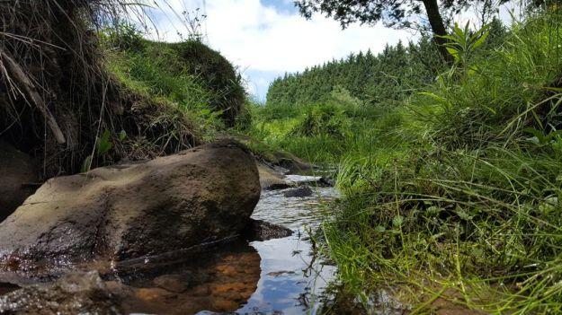 stream-running-through-the-veld