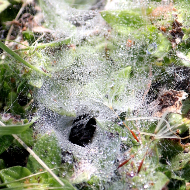 05-invertebrates-spider-web-img_7545